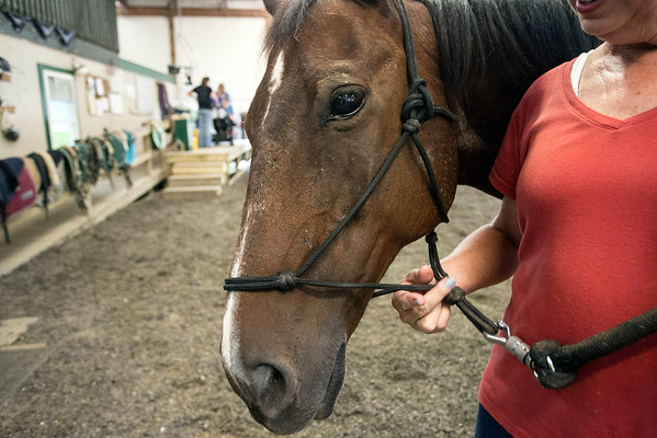 Major is one of the many horses assisting in therapy and rehabilitation at Green Hill Therapy in eastern Jefferson County. 9/8/16