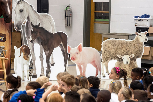 Cardboard animals were part of the set used to teach students at St. Matthew's Elementary about farming and the process of creating food on Thursday morning. 10/20/16