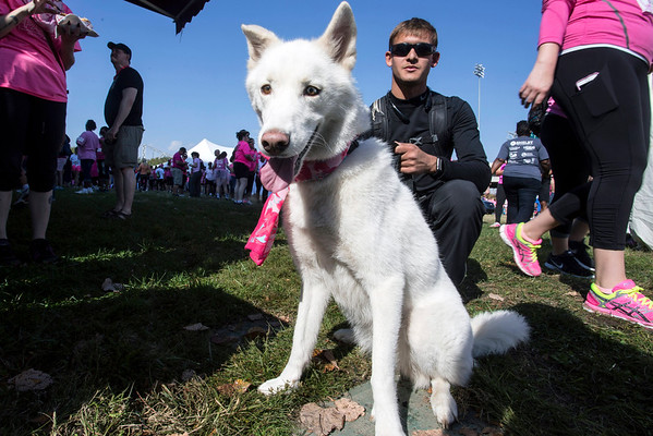 Chris Hernandez placed a pink bandana around the neck of his dog Kira for the Making Strides Against Breast Cancer Walk. 10/30/16