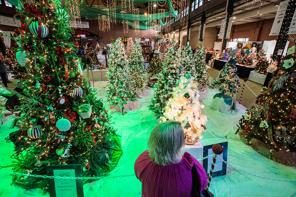 A forest of holiday delight overwhelms the senses at the 2016 Festival of Trees & Lights. 11/11/16