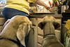 Weimaraners Quincy and Birdie watch closely as owner Beth Schofield prepares another batch of peanut butter pupcakes. 3/6/17