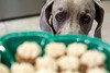 Birdie the Weimaraner was ready for a sample from a fresh batch of peanut butter pupcakes. 3/6/17