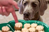 Weimaraner Birdie is ready for a treat as peanut butter pupcakes are finished by owner Beth Schofield. 3/6/17