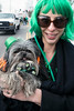Sarah Milam and little dog LuLu marched in the St. Patrick's Parade as part of a dressed up dog display put on by Louisville Metro Animal Services. 3/11/17