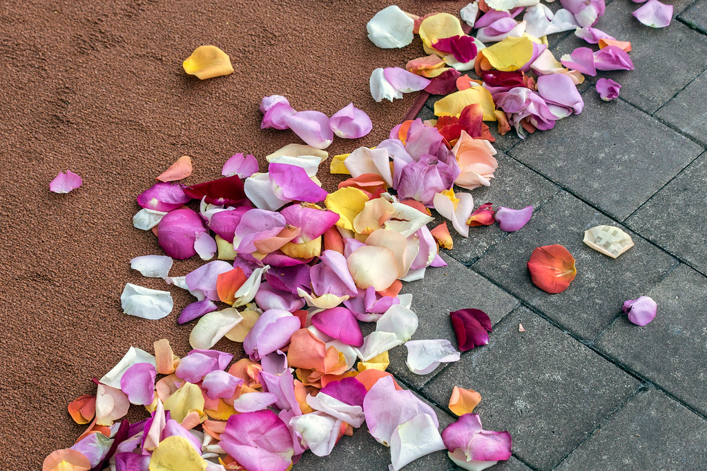 A colorful mix of petals were strewn about at the Ali Center as part of the opening of the I Am Ali Festival on Saturday. 6/3/17
