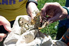A mix of lawn clippings and leaves is searched by students participating in the Gear Up STEM Enrichment Camp at Parkview Middle School in Jeffersonville, IN. 7/12/17