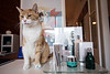 A few free-roaming cats are part of the scene inside Bays Beauty Boutique on East Market Street. 10/31/17