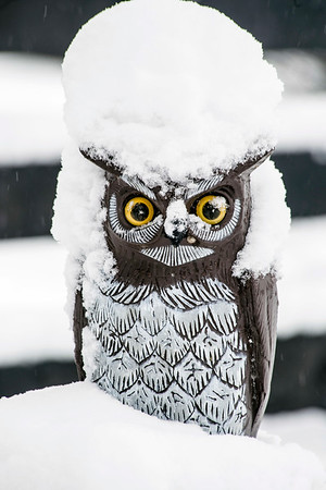 A decorative owl in a Germantown backyard transformed into a snow owl by Wednesday morning. 3/21/18