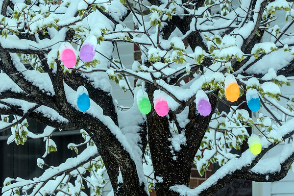 Easter decorations in a Germantown front yard signal that Spring has arrived, but the snow reveals Winter dragging its feet at the exit. 3/21/18