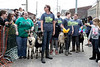 Goats lined up along Clay Street near the corner of Market Street before the start of another race during the annual Bock Fest in NuLu on Saturday afternoon. 3/31/18