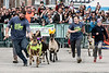 A goat named Gin and Tonic broke from the pack to take the lead and win the 3rd race of the annual Bock Fest on Saturday. 3/31/18