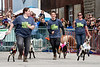 Baby goats sprint toward the finish line during the 2nd race of the day at Bock Fest. 3/31/18