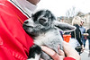 A baby goat named Slate found comfort in the arms of Stephanie Vogel during Bock Fest. 3/31/18
