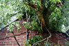 The back wall of a house in Bon Air buckles under the weight of a collapsed tree after a Thursday thunderstorm caused severe damage on the property. 6/1/18