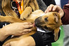 Dogs and puppies up for adoption at Mutt Madness received lots of love and affection from visitors in attendance at the GIE+ Expo on Thursday. 10/18/18