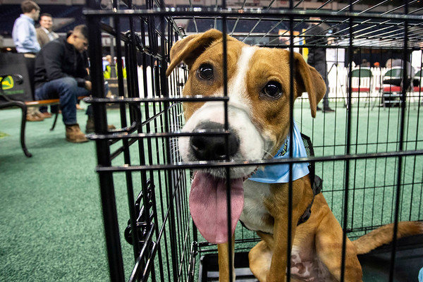 Dogs from the Humane Society had a chance at being adopted during an event called Mutt Madness at the GIE+ Expo on Thursday. 10/18/18