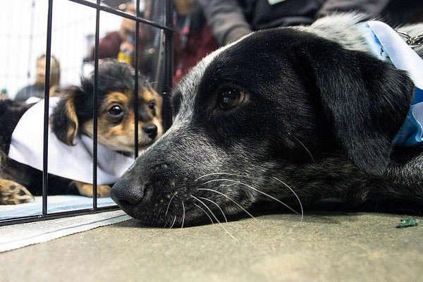 A pair of adoptable dogs got close during Mutt Madness on Thursday at Freedom Hall. 10/18/18