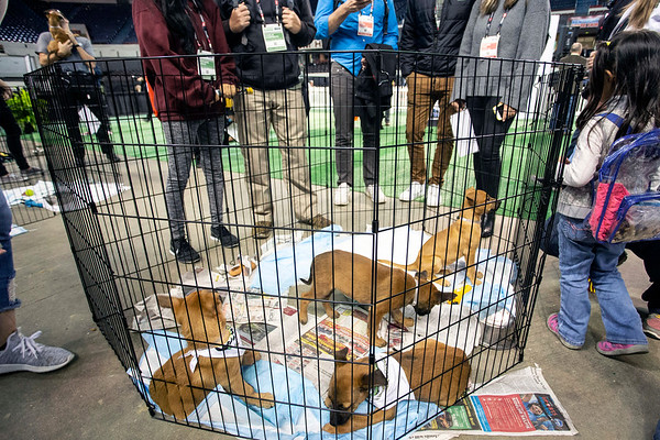 A family of puppies were excited to be the center of attention and receiving lots of love during Mutt Madness in Freedom Hall on Thursday afternoon. 10/18/18