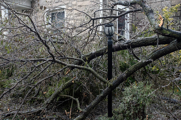 Several homes along the 3100 block of Bobolink Road in the Audubon Park area suffered downed branches and a snarled mess when they awoke on Thursday morning. 11/15/18