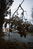 A tree branch on Minoma Avenue dangled dangerously on an unbroken power line after an overnight ice storm that left the street and much of the area without power. 11/15/18