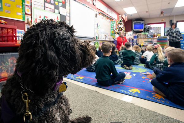 Ariel the labradoodle keeps a close watch over Hadley Jo Lange during classes at St. Patrick. Ariel has been trained to detect oncoming epileptic seizures that complicate Hadley Jo's life. 12/11/18