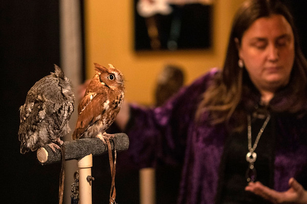 Owls were on display during the Yule Ball at the Palace Theatre on Friday night as Harry Potter fans were treated to an assortment of themed items and areas related to the popular book series. 12/21/18
