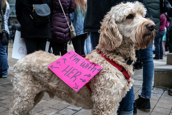 Mirnada Hellman's dog Thor showed his support during the Louisville Women's Rally on Sunday afternnon at the Ali Center. 1/27/19