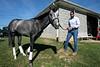 Trainer Mark Simms, Jr walks his horse Kaziranga on a Friday morning at the Churchill Trackside Training Facility. 6/14/19