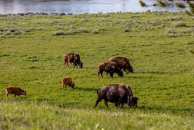 Yellowstone-NP-212