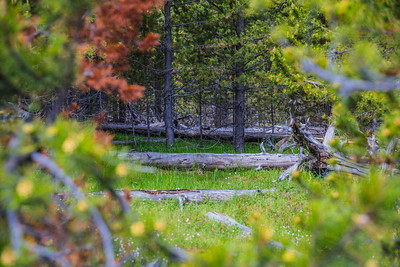 Yellowstone-NP-249