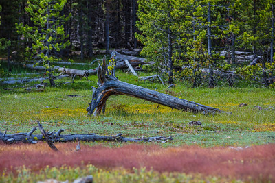 Yellowstone-NP-253