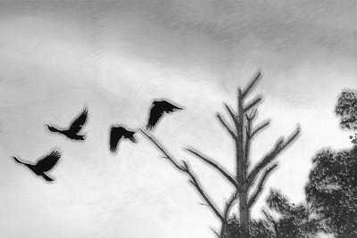 """Fly Away Creative"""