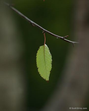 Very last leaf