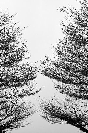 trees-in-winter