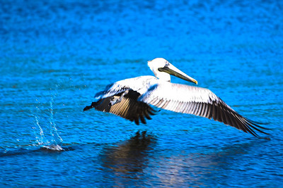 RonaldJAbbate_evergladesbirds-8