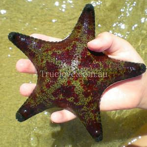 starfish DSCN1831
