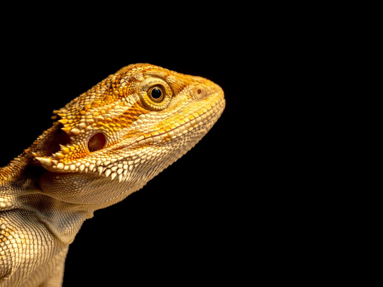 Dragon with an Attitude