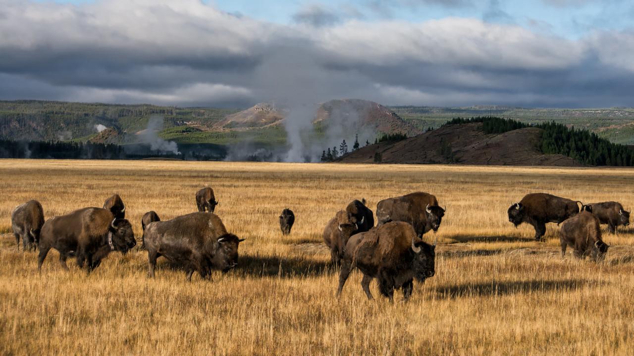 Morning - Yellowstone 2015