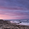 Dawn at the beach - Elephant Seals of Piedras Blancas, CA