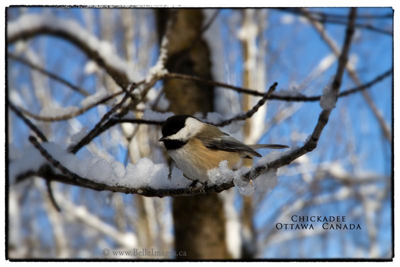 Winter's Friend