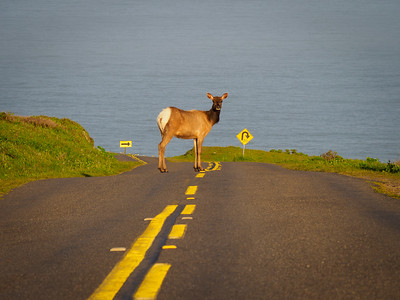 All Traffic Stops for the Tule Elk