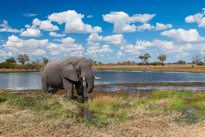We found this elephant on our Safari Tour of Botswana.  The clouds would roll in each day.  They were terrible for star gazing, but great for afternoon shots like this! Botswana 2013