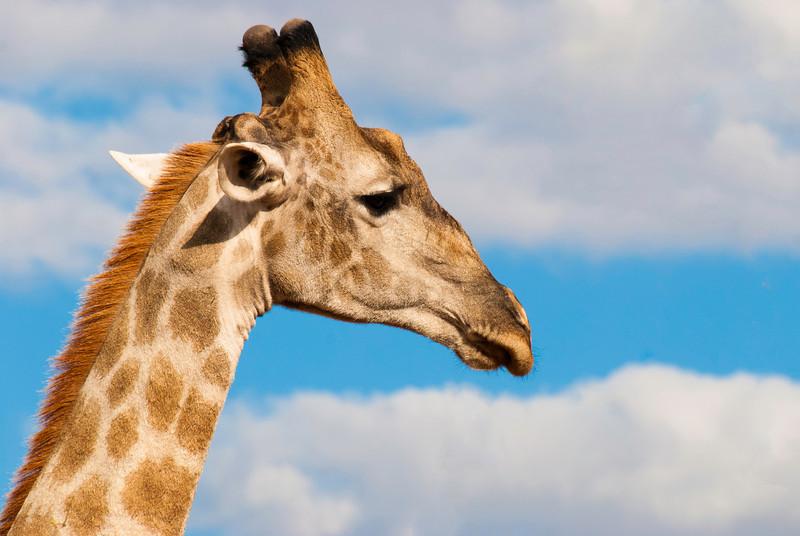 Botswana Safari 2013
