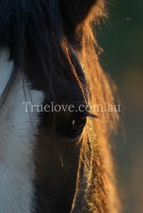 horse DSC_0161