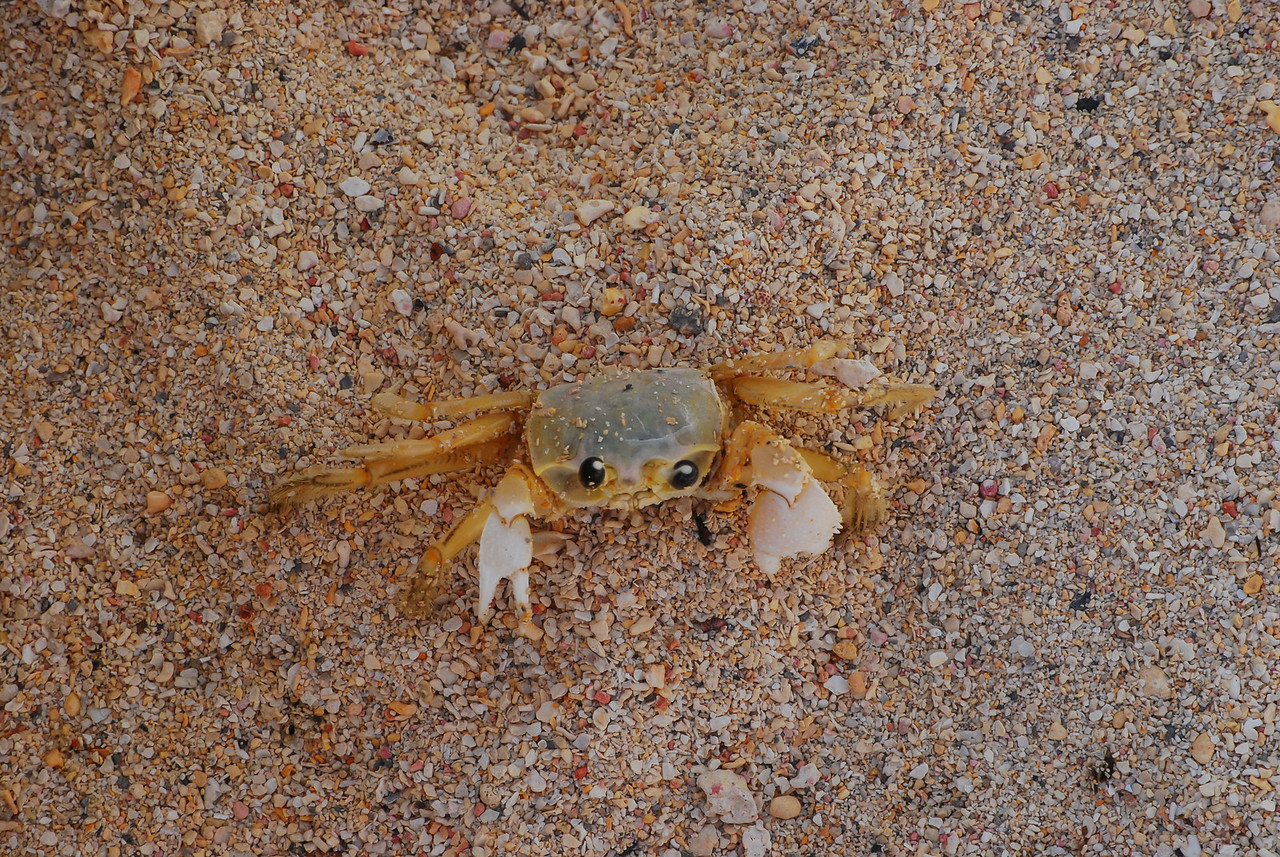 I almost stepped on this little guy during the Ocean portion of our Belize Trip. 2009