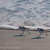 Hilton Head Island_8985-11