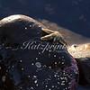 A six-rayed star sits on a tidepool rock near Half Moon Bay