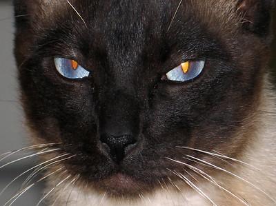 Salem  2006