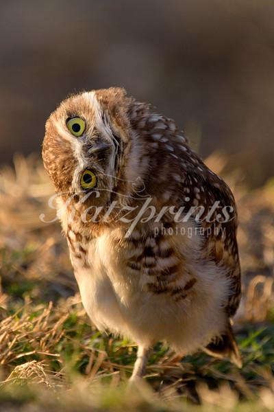 Watcha looking at?!