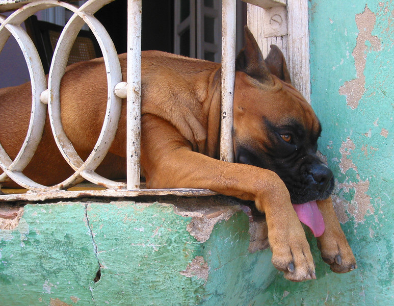 Hot Dog, Trinidad, Cuba.